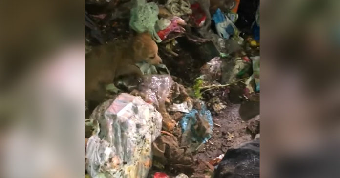 Recolectores de basura rescatan a un perro