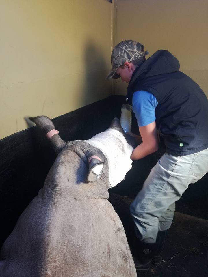 Rinoceronte huérfano