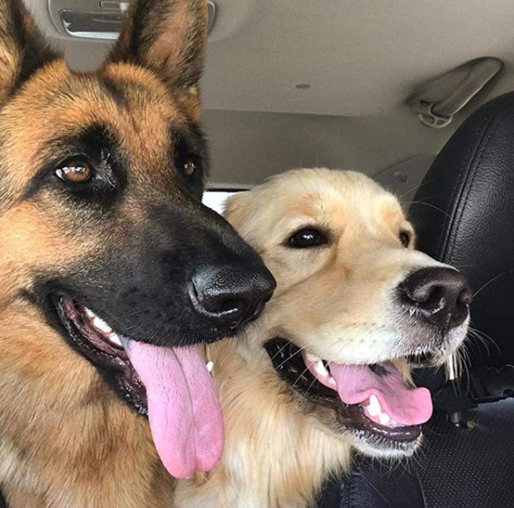 Ryker y Bailey