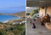 Santuario felino busca a un cuidador para que viva en una isla griega con 55 gatos