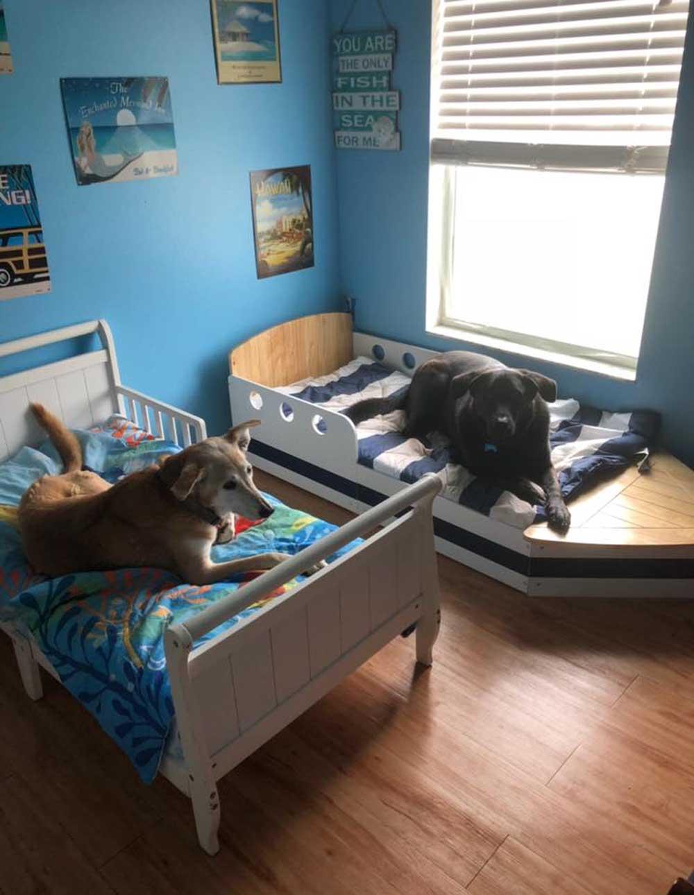 habitación para perros