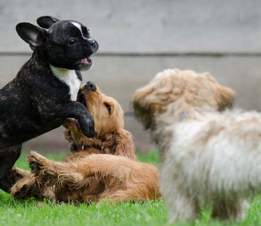Pasos para adoptar al perro perfecto