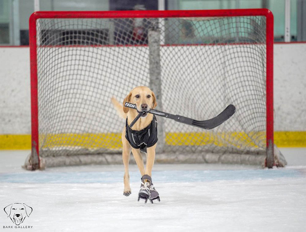 Benny es el mejor patinador