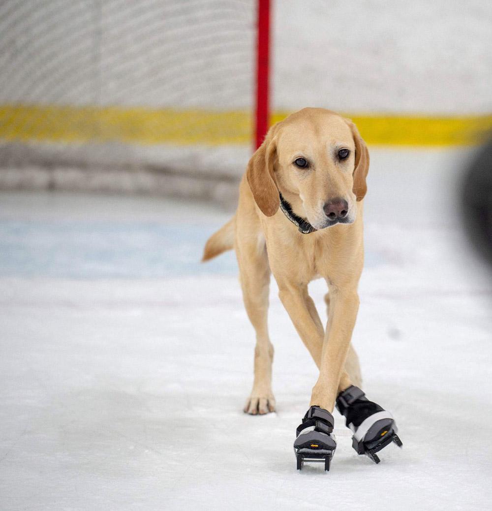 Benny es un gran patinador