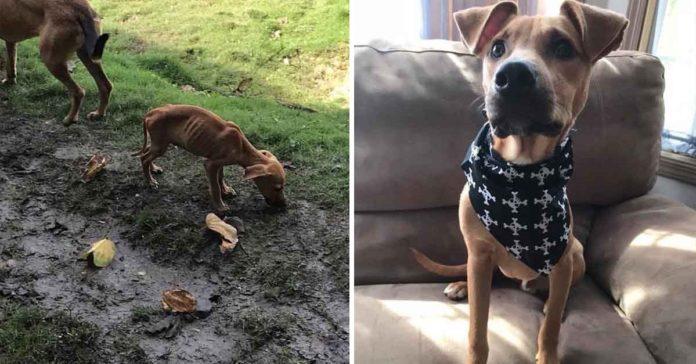 Chica salvó la vida de un cachorro hambriento durante sus vacaciones