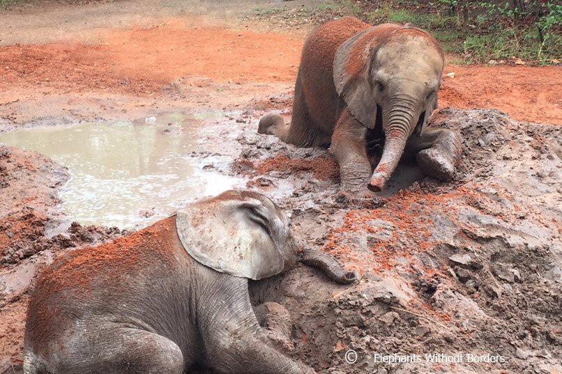 Elefantes en santuario
