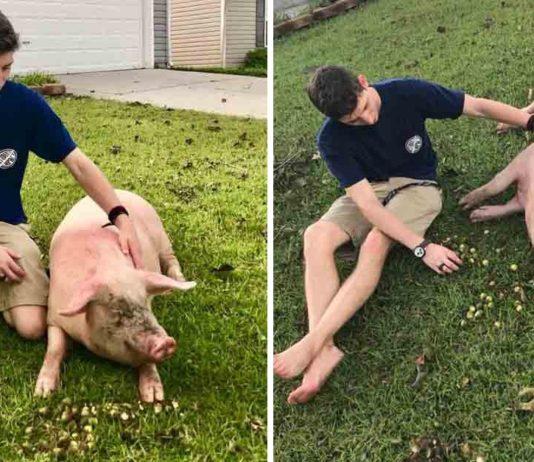 Este cerdo nadó por su vida tras inundación por el huracán Florence