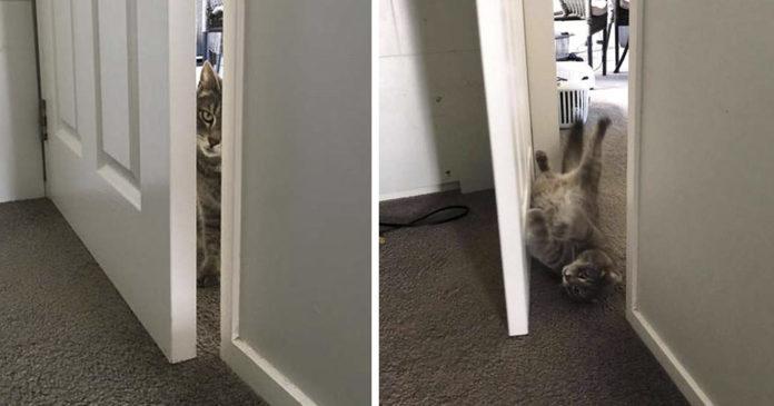 Gato curioso encuentra la manera de abrir puertas