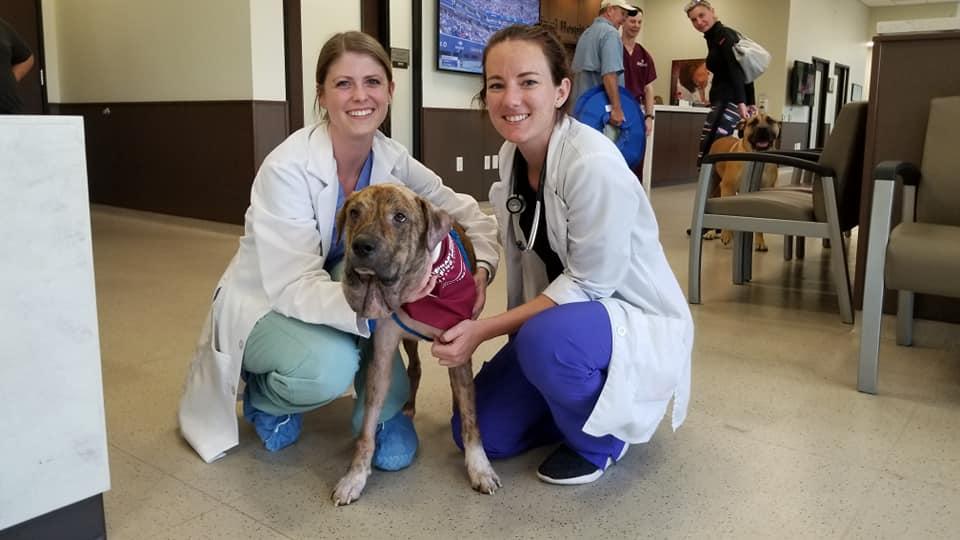 Gus y veterinarios