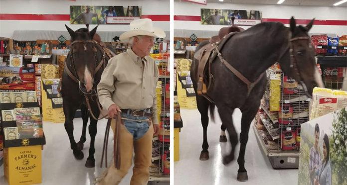 Hombre trae su caballo de compras a la tienda