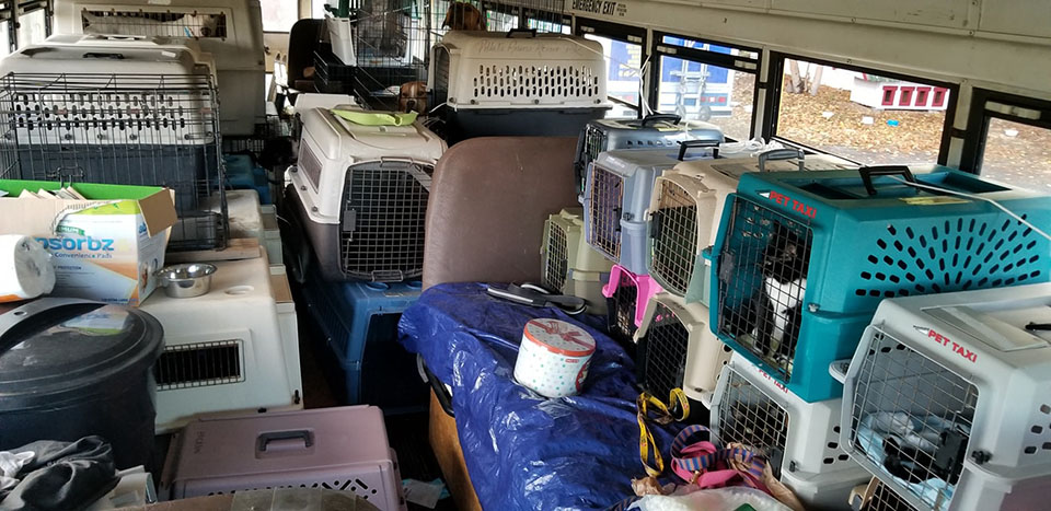 Hombre usa autobús para rescatar perros
