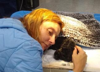 Pequeño perro muere protegiendo a su familia de un oso