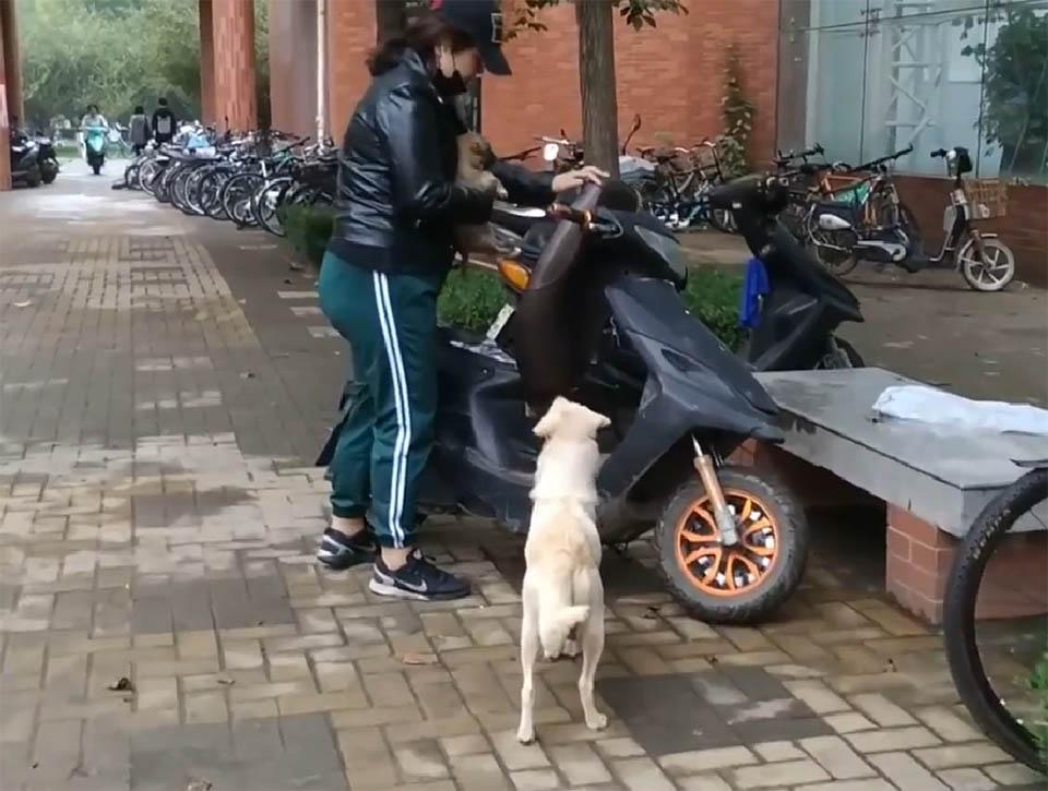 Perrita persigue a su cachorro