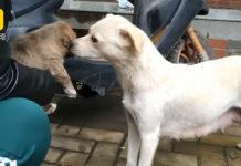 Perrita se despide de su cachorro con un beso