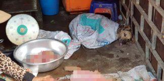 Perro rescatado a tiempo del comercio de carne de perro