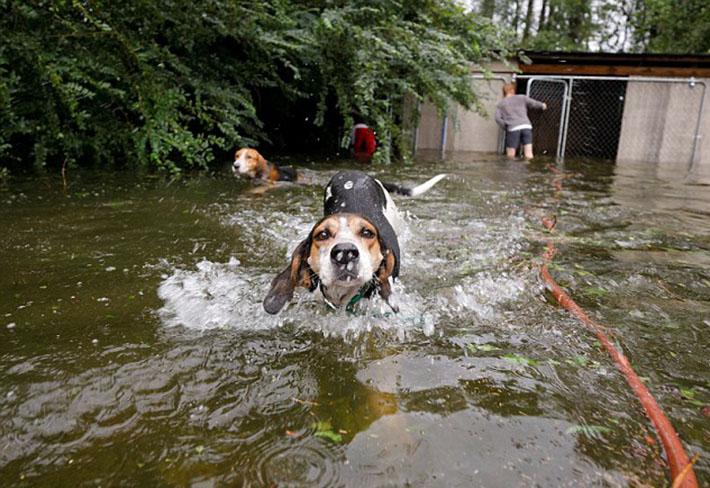 Perro rescatado del huracán Florence