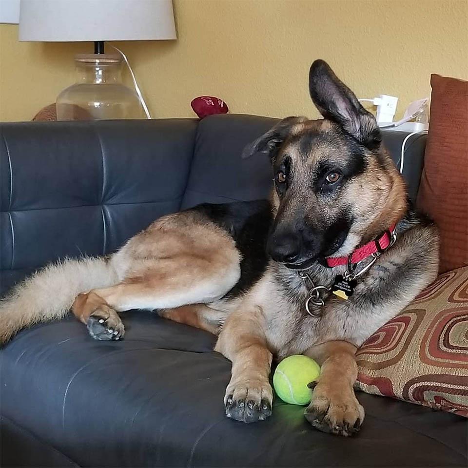 Rocco en el sofá