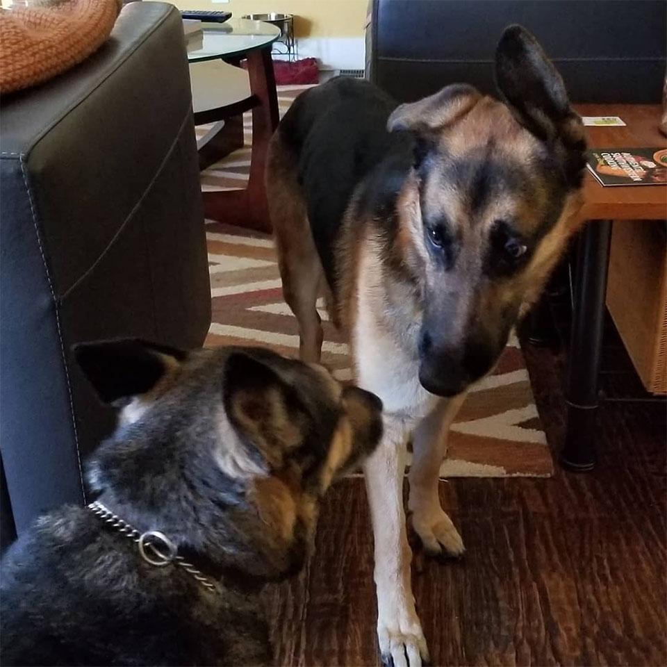 Rocco y su hermano de acogida
