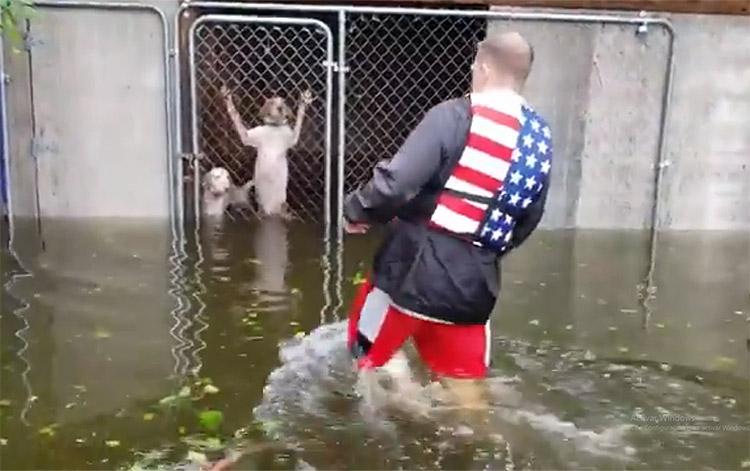 Seis perros rescatados de una inundación