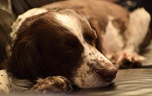 Veterinario revela lo que hacen nuestras mascotas en sus últimos momentos