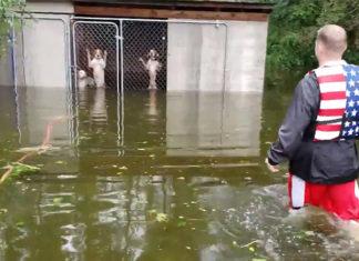Voluntario rescata a seis perros de inundación por el huracán Florence