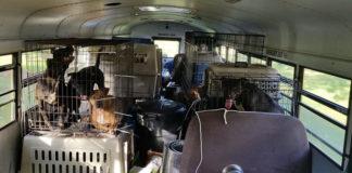 hombre compra autobús escolar para rescatar perros