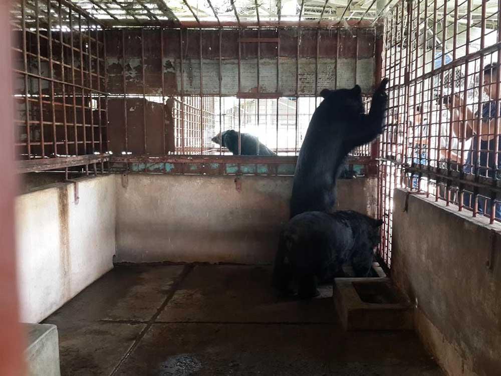tres de los cinco osos