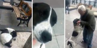 Abuelo se reencuentra con su perro perdido después de tres años