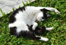 la Artritis en gatos o Artrosis reumatoide felina es una enfermedad frecuente