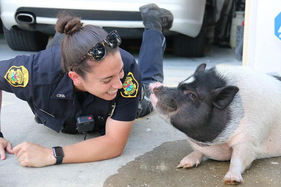 Berg y el cerdo