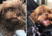 Chico dejó a su perro de 20 años en un refugio para que los sacrificaran