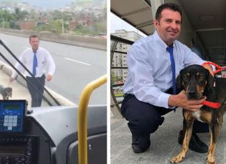 Conductor de autobús rescata a un perro y los pasajeros lo aplauden