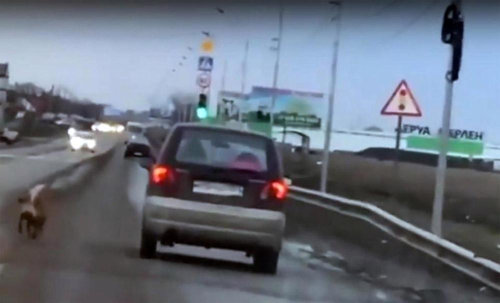 Dinka tras el auto