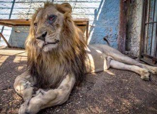 Docenas de animales fueron rescatados del zoológico del infierno