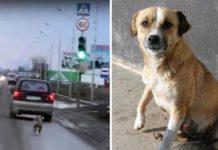 Esta perrita corrió tras el auto de su famiia después de ser abandonada