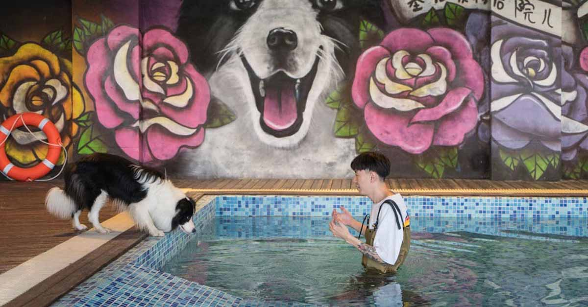 Este border collie tiene su propia mansión de 500,000 dólares en Beijing