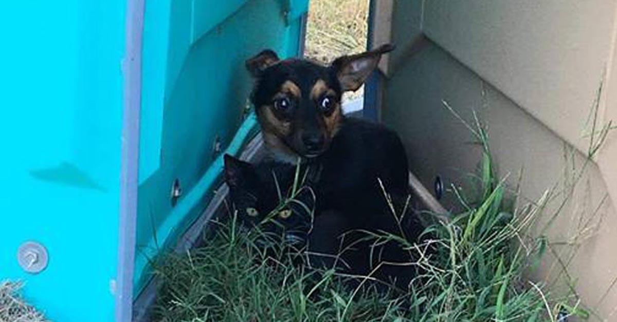 Este perrito protegió a su mejor amiga felina hasta que fueron rescatados