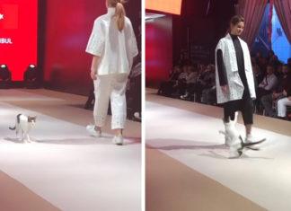 Gato se roba el espectáculo en desfile de modas