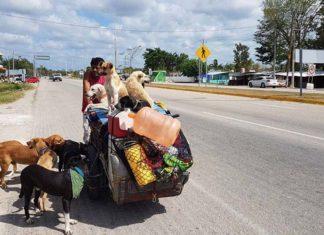 Hombre recorre las calles en su triciclo rescatando perros