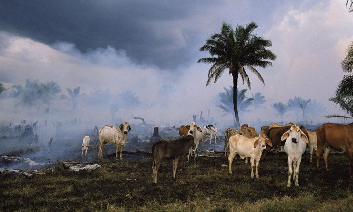 La humanidad ha acabado con el 60% de la población animal