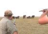 Manada de elefantes ataca a cazadores que disparan a uno de los suyos