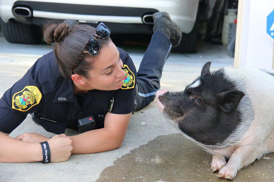 Oficial Berg y el cerdo