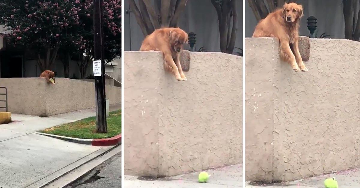 Perriro tira su pelota sobre la pared para que las personas jueguen con él