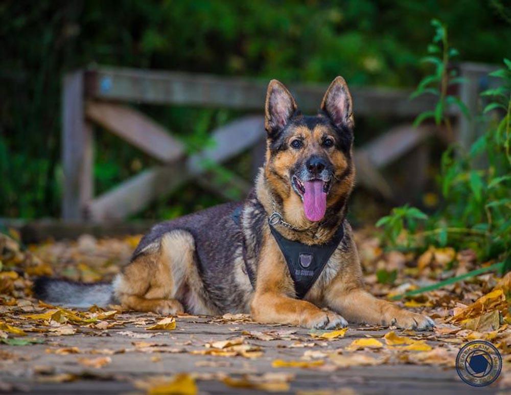 Perro de la unidad canina