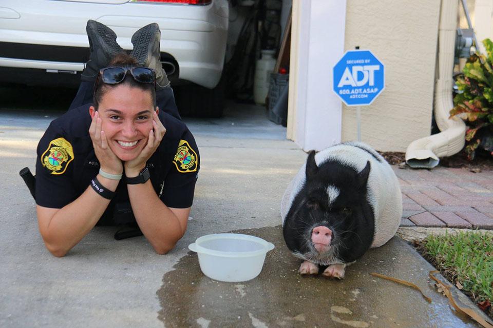 Policía es amiga del cerdo