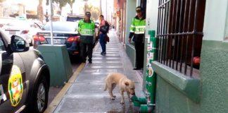 Policías instalan dispensadores para alimentar perros