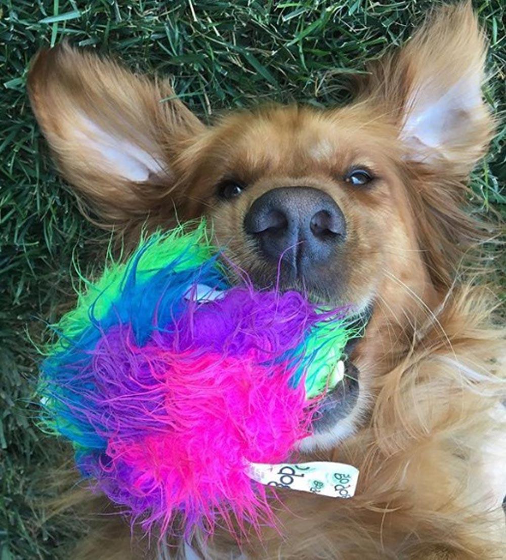 Riley y su juguete