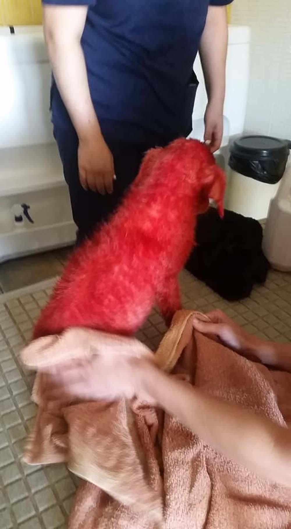 Scarlet fue pintada de rojo