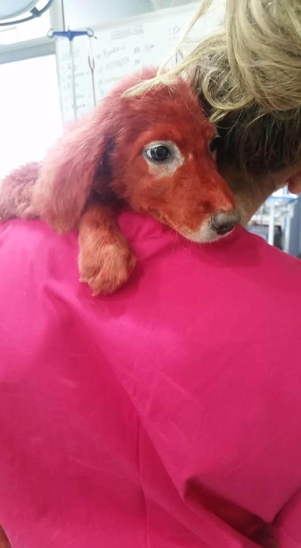 Scarlet se encuentra a salvo