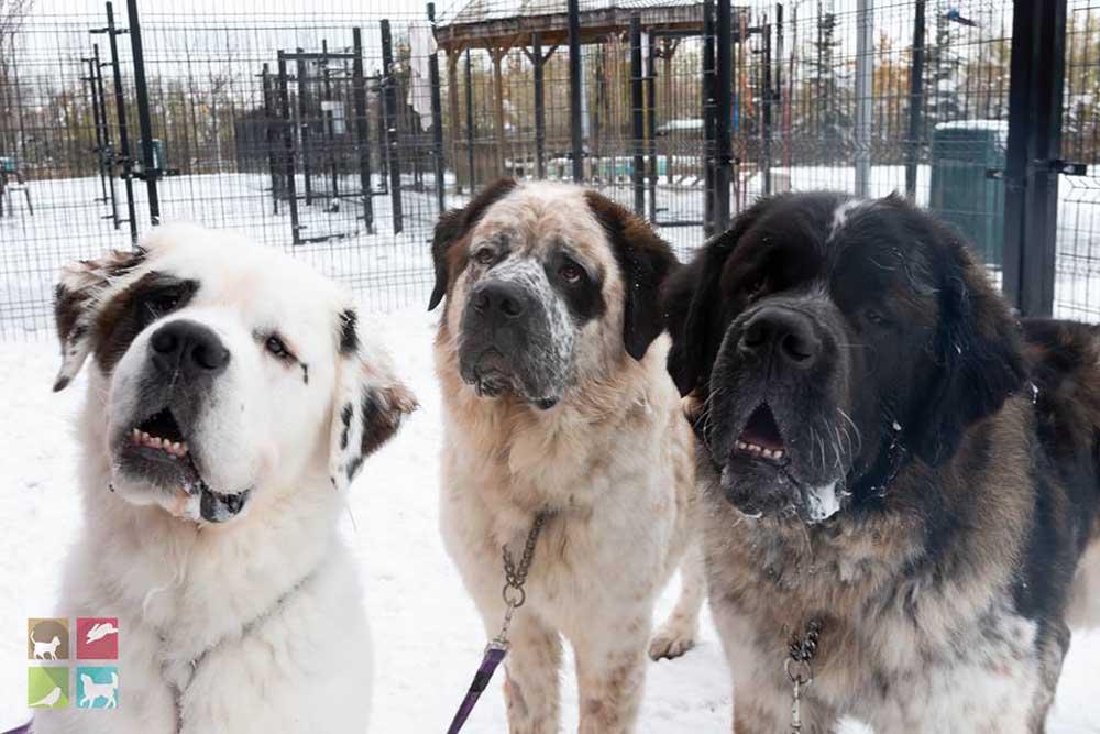 Trío de perros